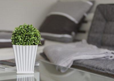 Pflanze steht auf Wohnzimmertisch