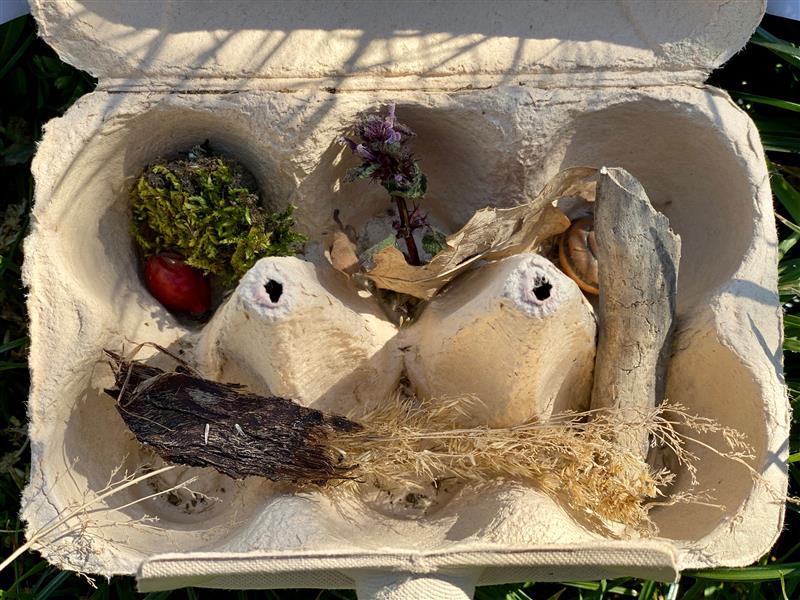 Eierpappe gefüllt mit Naturschätzen.